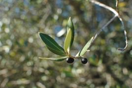 Some more olives